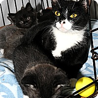 Adopt A Pet :: Squeakie 3 - Plainville, MA