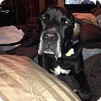 Adopt A Pet :: Sampson - Albuquerque, NM