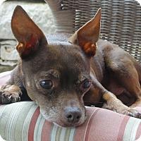 Adopt A Pet :: Curious George - Austin, TX