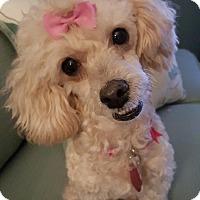 Adopt A Pet :: Daisy - Pompton Lakes, NJ