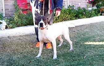 Hound (Unknown Type) Mix Dog for adoption in Glendale, Arizona - Richard