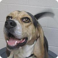 Adopt A Pet :: Sherlock - LaGrange, KY