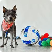 Adopt A Pet :: Coco - Calgary, AB