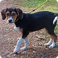 Adopt A Pet :: Princess - Allentown, PA