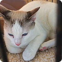 Adopt A Pet :: Meeko (in CT) - Manchester, CT