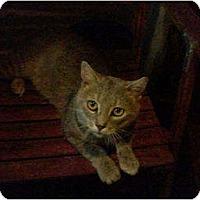 Adopt A Pet :: Harold - Portland, ME