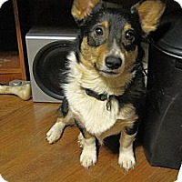 Adopt A Pet :: Max - Murfreesboro, TN