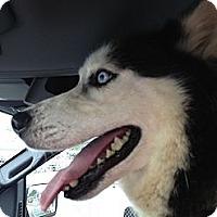 Adopt A Pet :: Kai - Dandridge, TN