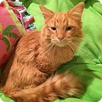 Adopt A Pet :: Cheeto - Ogallala, NE