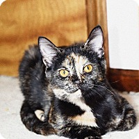 Adopt A Pet :: Scarlet - Xenia, OH