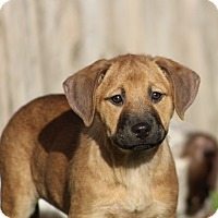 Adopt A Pet :: Hope - Humble, TX