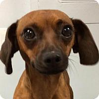 Adopt A Pet :: Al - Weston, FL
