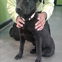 Adopt A Pet :: Melba - Barnwell, SC