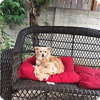 Adopt A Pet :: Lady - Fresno, CA