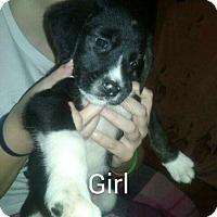Adopt A Pet :: Jude - Manchester, NH