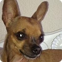 Adopt A Pet :: Tnkerbelle - Poulsob, WA