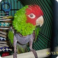 Adopt A Pet :: Ciesta - Lexington, GA