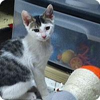 Adopt A Pet :: Finnegan - Island Park, NY