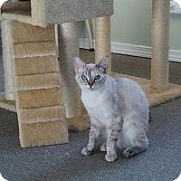 Adopt A Pet :: Grace - Walla Walla, WA