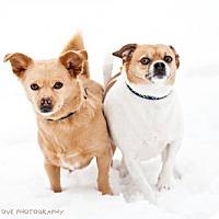 Adopt A Pet :: Minky - Salt Lake City, UT