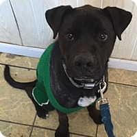 Adopt A Pet :: Om - Antioch, IL
