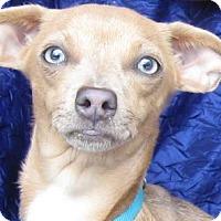 Adopt A Pet :: Rose Jenkins - Cuba, NY