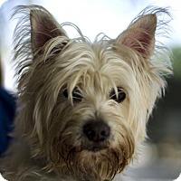 Adopt A Pet :: Stormie - Baton Rouge, LA