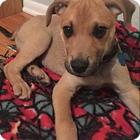 Adopt A Pet :: Finn - Erie, CO