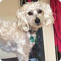 Adopt A Pet :: Kirby - Tustin, CA