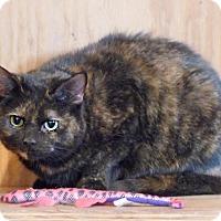 Adopt A Pet :: Patches - Monterey, VA