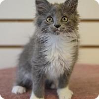 Adopt A Pet :: Pearl - DFW Metroplex, TX