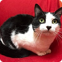 Adopt A Pet :: Millie - Maryville, MO