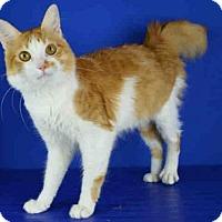 Adopt A Pet :: A029066 - Norman, OK