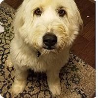 Adopt A Pet :: COURTESY LISTING:  Chloe - Tulsa, OK