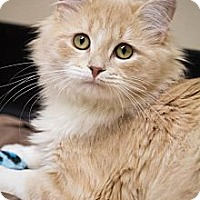 Adopt A Pet :: Julian - Chicago, IL