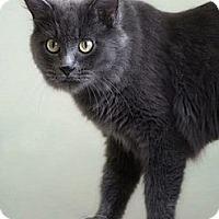Adopt A Pet :: Keira - Phoenix, AZ