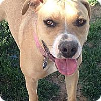 Adopt A Pet :: Bailey - Cedar City, UT
