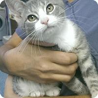 Adopt A Pet :: Mark Wahlberg - Richboro, PA