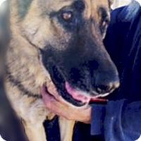 Adopt A Pet :: Cina - Sacramento, CA