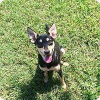 Adopt A Pet :: Katara - Fort Valley, GA