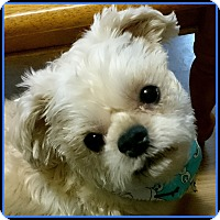 Adopt A Pet :: ALPHIE - ADOPTION PENDING - Clinton, CT