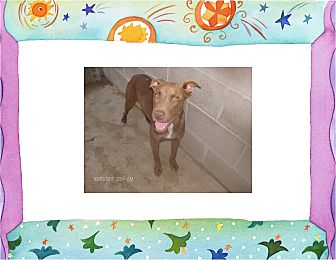Labrador Retriever/Boxer Mix Dog for adoption in KELLYVILLE, Oklahoma - PIXIE