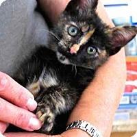 Adopt A Pet :: Peanut Electra - Davis, CA