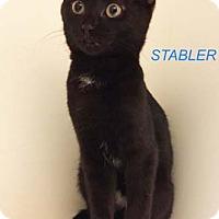 Adopt A Pet :: Stabler - Merrifield, VA