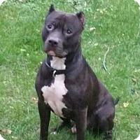 Adopt A Pet :: Leo - Des Moines, IA