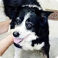 Adopt A Pet :: Ivy - Silsbee, TX