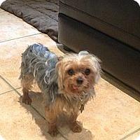 Adopt A Pet :: Axle - Gulfport, FL