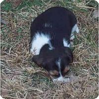 Adopt A Pet :: Hannah - cedar grove, IN
