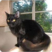 Adopt A Pet :: Aurora - Phoenix, AZ