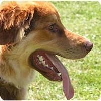 Adopt A Pet :: Sport - Rigaud, QC